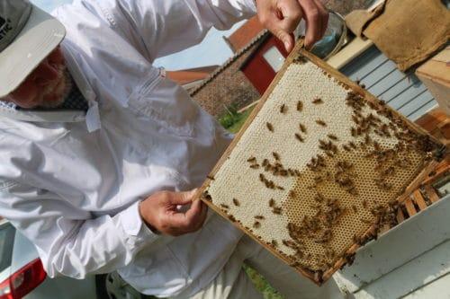 besøg biavlerne