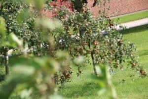 æbleplantagerne