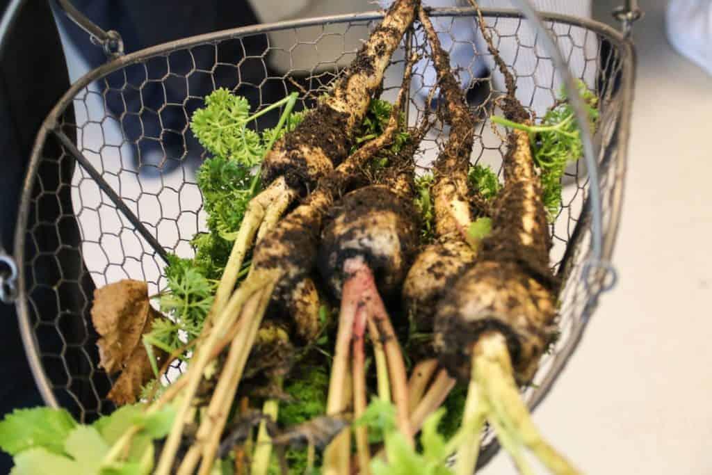 MADENS HUS På Det Grønne Museum Grønt Fra Den Landbrugbotaniske Have Pressefoto.JPG
