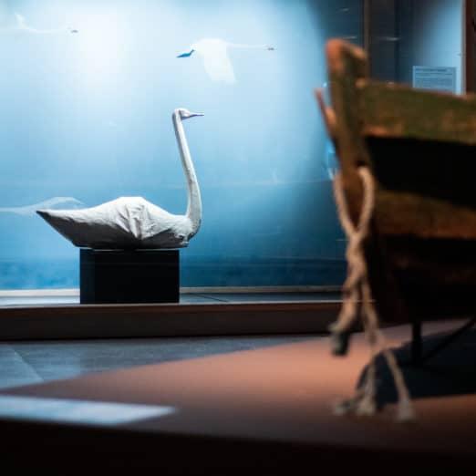 strand havjagt udstilling svane