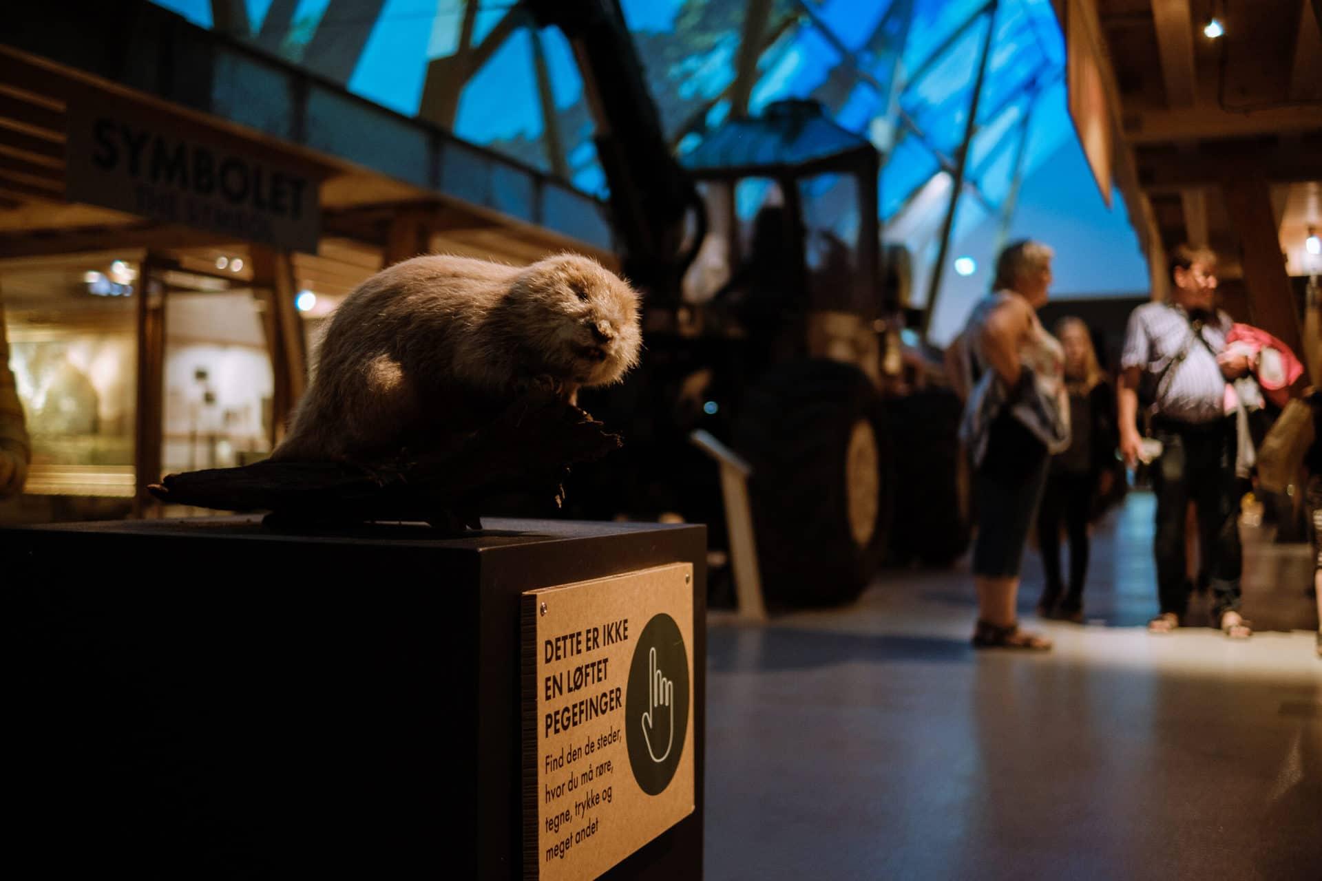 Oplev udstillingen STORT om skoven på Det Grønne Museum